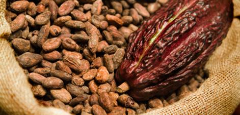 Image result for biji kakao